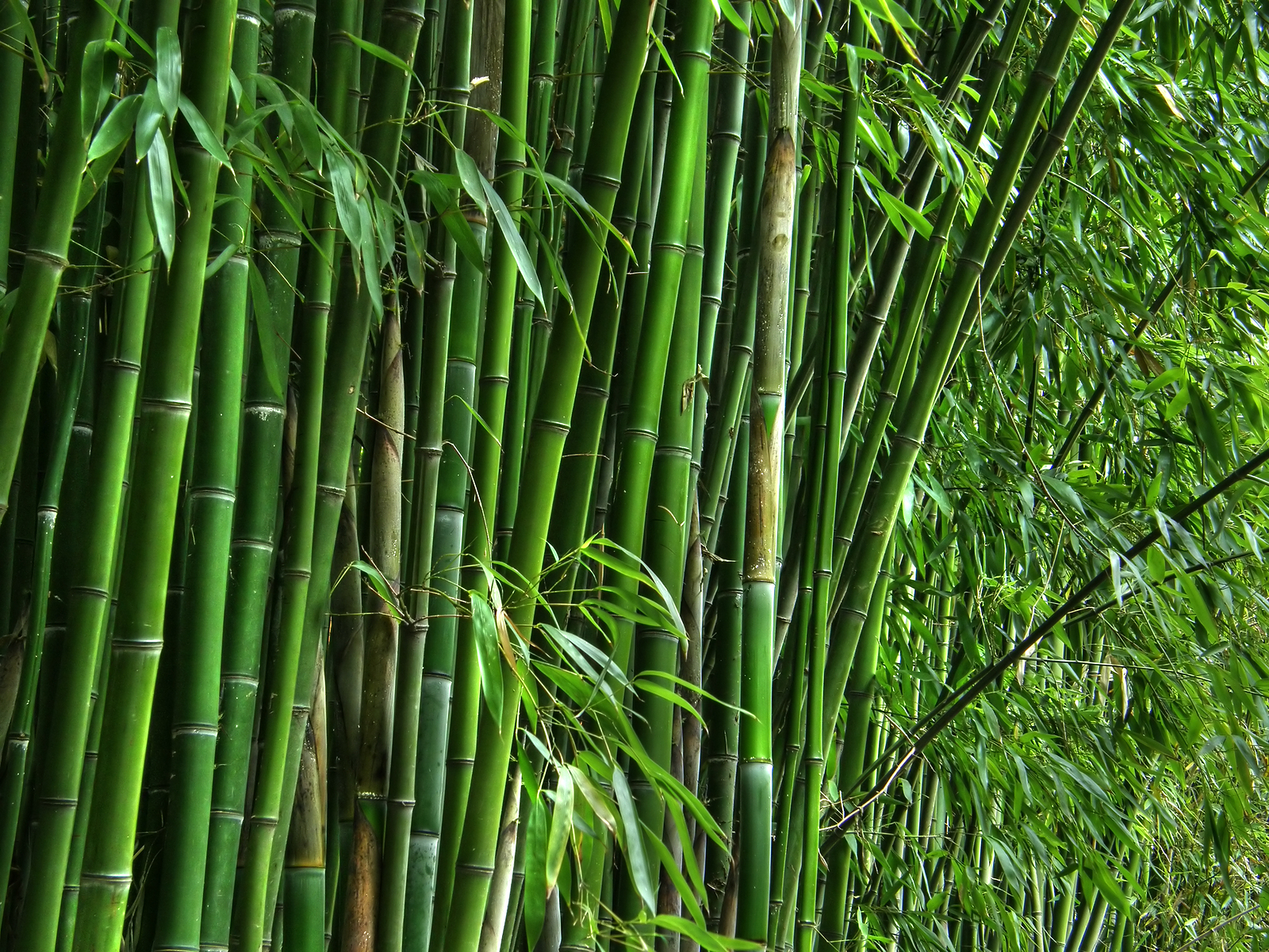 The economic value of bamboo