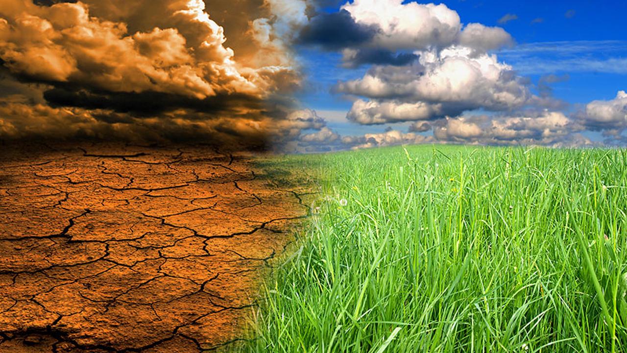 Trồng tre chống biến đổi khí hậu